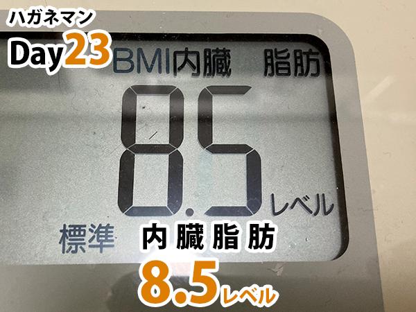 ハガネマン23日目内臓脂肪8.5レベル
