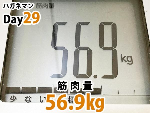 ハガネマンDay29日目筋肉量56.9キログラム