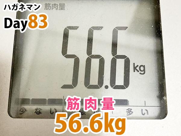 ハガネマンDay83日目筋肉量56.6キログラム